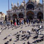piccioni-venezia